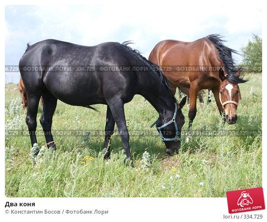 Два коня, фото № 334729, снято 30 апреля 2017 г. (c) Константин Босов / Фотобанк Лори
