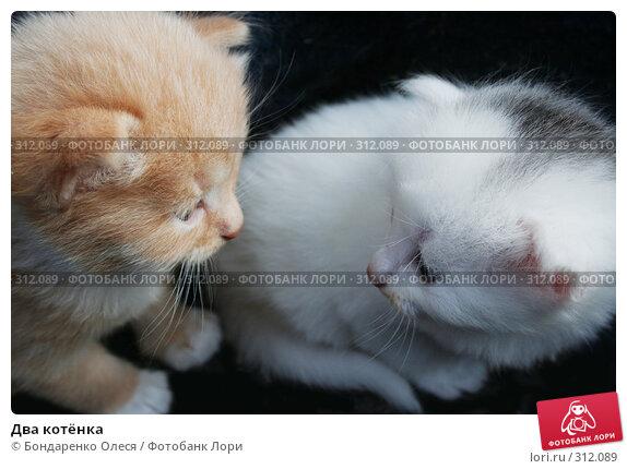 Купить «Два котёнка», фото № 312089, снято 24 августа 2006 г. (c) Бондаренко Олеся / Фотобанк Лори