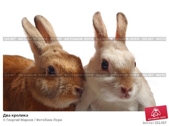 Два кролика, фото № 252057, снято 9 марта 2008 г. (c) Георгий Марков / Фотобанк Лори