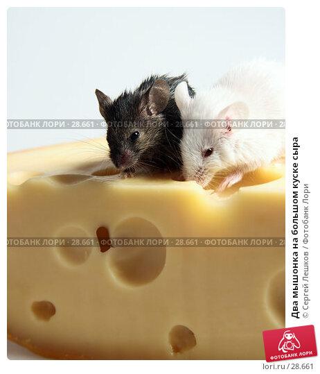 Два мышонка на большом куске сыра, фото № 28661, снято 18 марта 2007 г. (c) Сергей Лешков / Фотобанк Лори