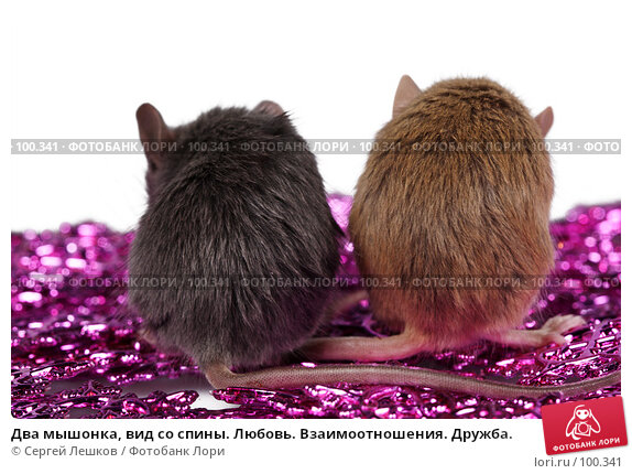 Два мышонка, вид со спины. Любовь. Взаимоотношения. Дружба., фото № 100341, снято 23 сентября 2007 г. (c) Сергей Лешков / Фотобанк Лори