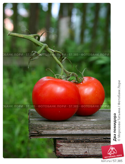 Два помидора, фото № 57385, снято 18 июня 2007 г. (c) Морозова Татьяна / Фотобанк Лори