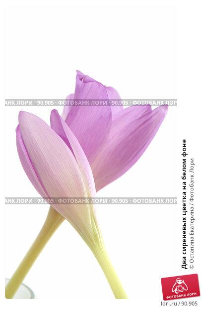 Купить «Два сиреневых цветка на белом фоне», фото № 90905, снято 18 сентября 2007 г. (c) Останина Екатерина / Фотобанк Лори