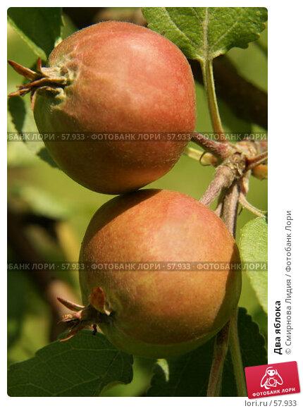 Два яблока, фото № 57933, снято 1 июля 2007 г. (c) Смирнова Лидия / Фотобанк Лори