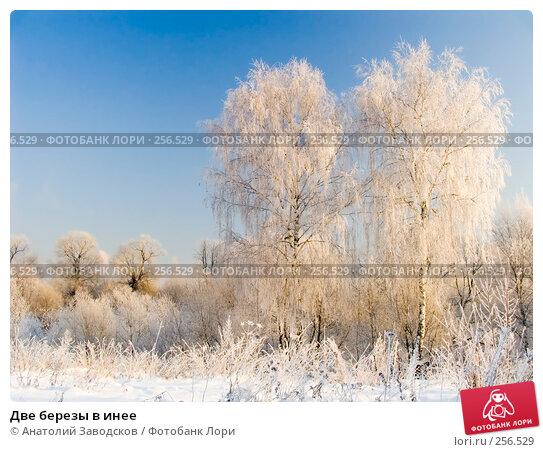 Две березы в инее, фото № 256529, снято 30 ноября 2004 г. (c) Анатолий Заводсков / Фотобанк Лори