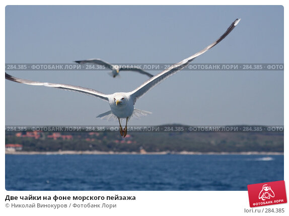 Две чайки на фоне морского пейзажа, эксклюзивное фото № 284385, снято 10 декабря 2016 г. (c) Николай Винокуров / Фотобанк Лори