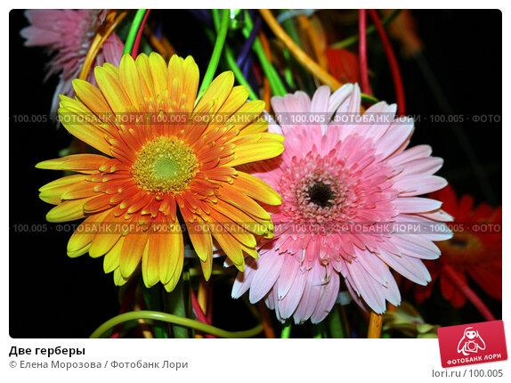 Две герберы, фото № 100005, снято 31 августа 2007 г. (c) Елена Морозова / Фотобанк Лори