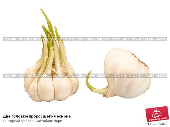 Две головки проросшего чеснока, фото № 129069, снято 4 января 2007 г. (c) Георгий Марков / Фотобанк Лори