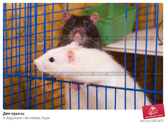 Две крысы, фото № 327417, снято 11 июня 2008 г. (c) Argument / Фотобанк Лори