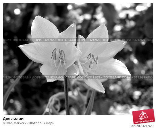 Две лилии, фото № 321929, снято 14 июня 2008 г. (c) Василий Каргандюм / Фотобанк Лори