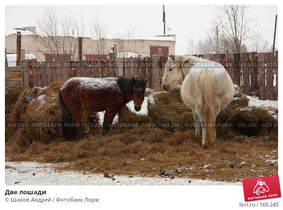 Две лошади, фото № 169245, снято 19 февраля 2007 г. (c) Шахов Андрей / Фотобанк Лори