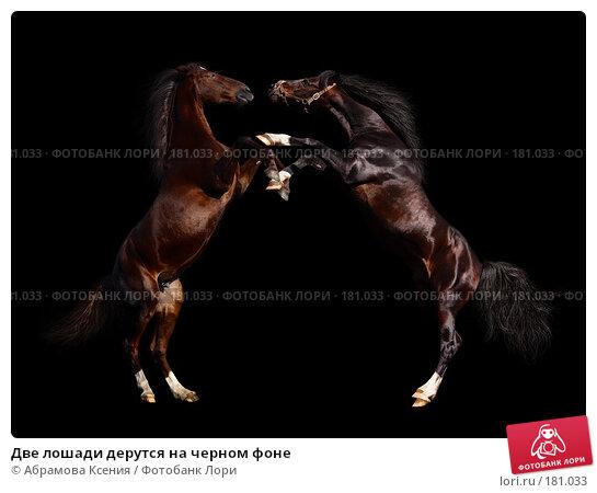 Две лошади дерутся на черном фоне, фото № 181033, снято 8 мая 2005 г. (c) Абрамова Ксения / Фотобанк Лори