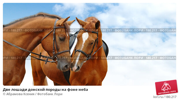 Купить «Две лошади донской породы на фоне неба», фото № 180217, снято 26 мая 2006 г. (c) Абрамова Ксения / Фотобанк Лори