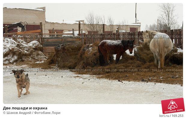 Две лошади и охрана, фото № 169253, снято 19 февраля 2007 г. (c) Шахов Андрей / Фотобанк Лори