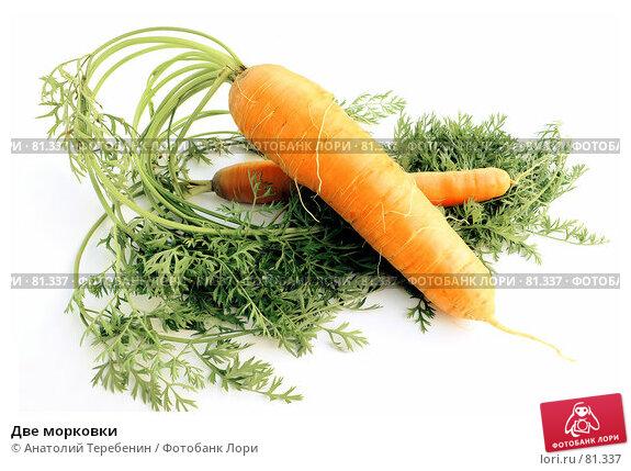 Две морковки, фото № 81337, снято 2 сентября 2007 г. (c) Анатолий Теребенин / Фотобанк Лори