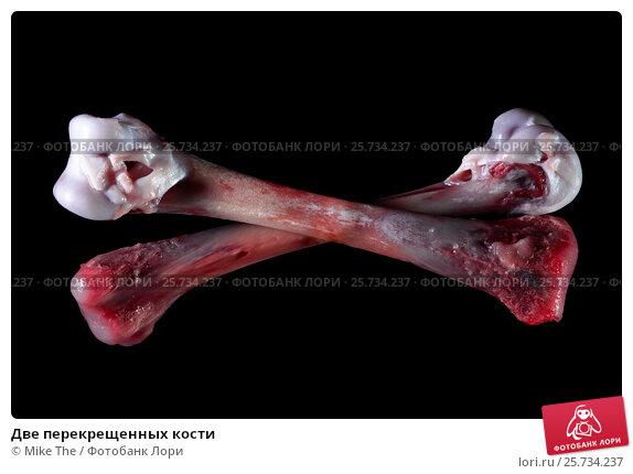 Купить «Две перекрещенных кости», фото № 25734237, снято 16 июля 2020 г. (c) Mike The / Фотобанк Лори