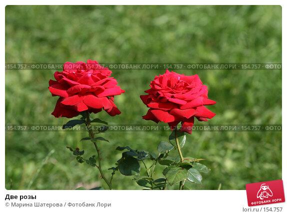 Две розы, фото № 154757, снято 21 июля 2007 г. (c) Марина Шатерова / Фотобанк Лори