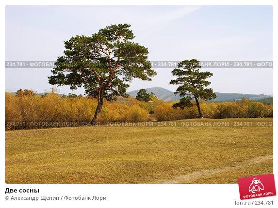 Две сосны, эксклюзивное фото № 234781, снято 24 сентября 2007 г. (c) Александр Щепин / Фотобанк Лори