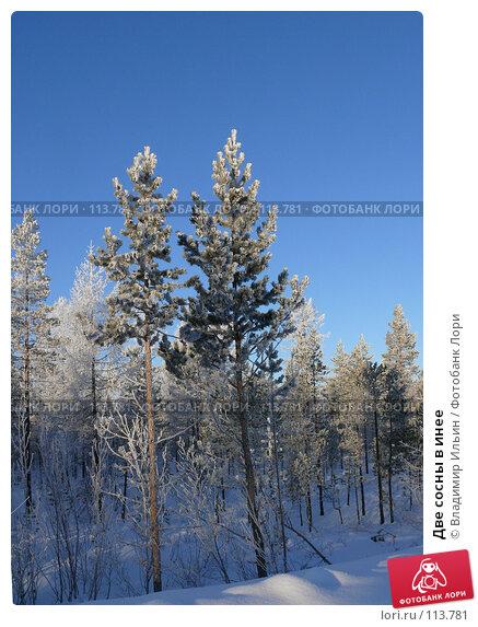 Две сосны в инее, фото № 113781, снято 9 ноября 2007 г. (c) Владимир Ильин / Фотобанк Лори