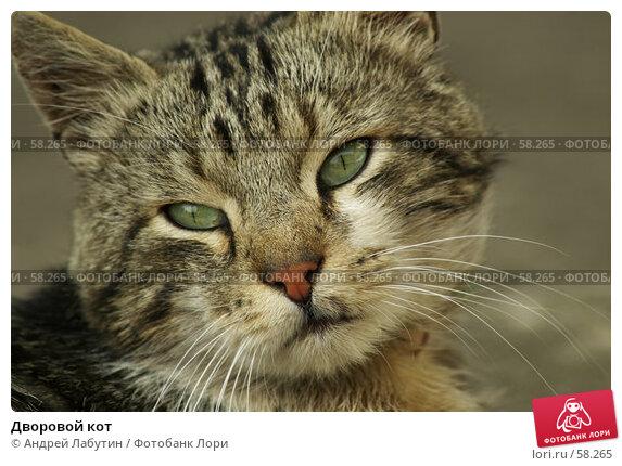 Дворовой кот, фото № 58265, снято 5 июля 2007 г. (c) Андрей Лабутин / Фотобанк Лори