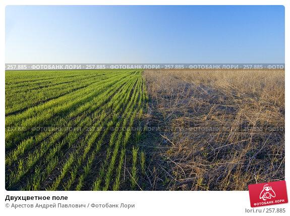 Двухцветное поле, фото № 257885, снято 12 апреля 2008 г. (c) Арестов Андрей Павлович / Фотобанк Лори