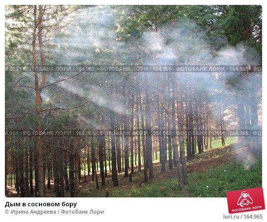 Купить «Дым в сосновом бору», фото № 164965, снято 3 июля 2006 г. (c) Ирина Андреева / Фотобанк Лори