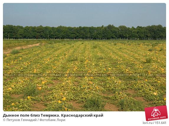 Дынное поле близ Темрюка. Краснодарский край, фото № 151641, снято 9 августа 2007 г. (c) Петухов Геннадий / Фотобанк Лори