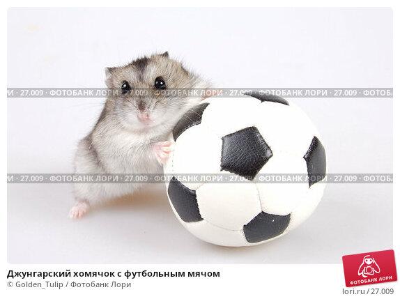 Купить «Джунгарский хомячок с футбольным мячом», фото № 27009, снято 18 марта 2007 г. (c) Golden_Tulip / Фотобанк Лори