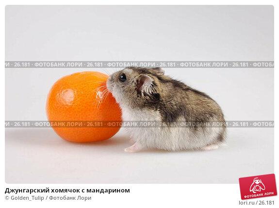 Джунгарский хомячок с мандарином, фото № 26181, снято 18 марта 2007 г. (c) Golden_Tulip / Фотобанк Лори