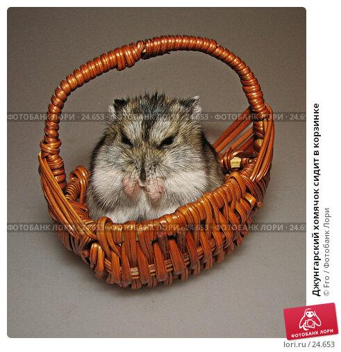 Джунгарский хомячок сидит в корзинке, фото № 24653, снято 18 марта 2007 г. (c) Fro / Фотобанк Лори