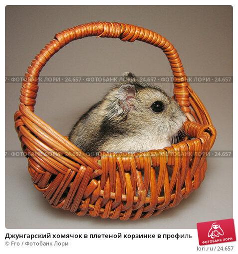 Джунгарский хомячок в плетеной корзинке в профиль, фото № 24657, снято 18 марта 2007 г. (c) Fro / Фотобанк Лори