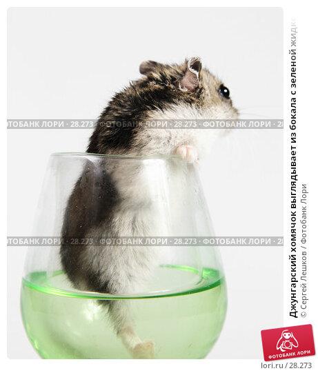Джунгарский хомячок выглядывает из бокала с зеленой жидкостью, боком, фото № 28273, снято 18 марта 2007 г. (c) Сергей Лешков / Фотобанк Лори