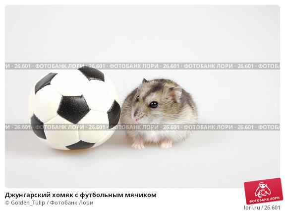 Купить «Джунгарский хомяк с футбольным мячиком», фото № 26601, снято 18 марта 2007 г. (c) Golden_Tulip / Фотобанк Лори