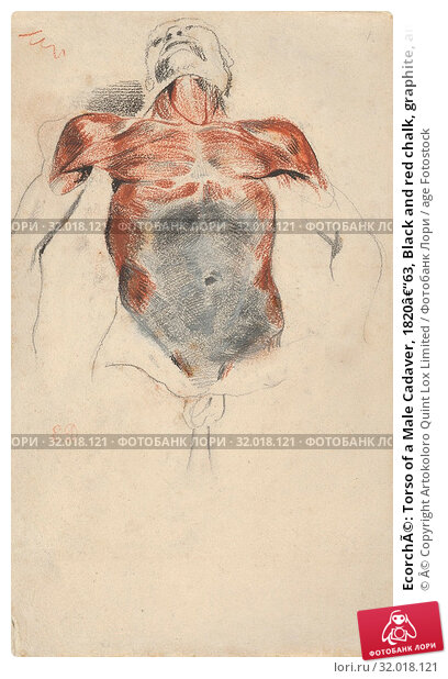 Купить «Ecorché: Torso of a Male Cadaver, 1820–63, Black and red chalk, graphite, and white chalk on wove paper, sheet: 9 15/16 x 6 1/4 in. (25.2 x 15.9 cm...», фото № 32018121, снято 21 мая 2017 г. (c) age Fotostock / Фотобанк Лори