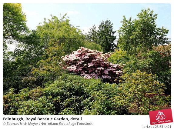 Купить «Edinburgh, Royal Botanic Garden, detail», фото № 23631421, снято 19 июля 2019 г. (c) age Fotostock / Фотобанк Лори