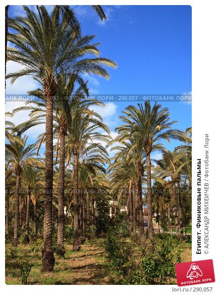 Египет. Финиковые пальмы, фото № 290057, снято 26 февраля 2008 г. (c) АЛЕКСАНДР МИХЕИЧЕВ / Фотобанк Лори