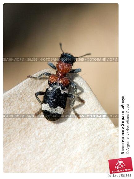 Экзотический красный жук, фото № 56365, снято 21 июня 2006 г. (c) Argument / Фотобанк Лори