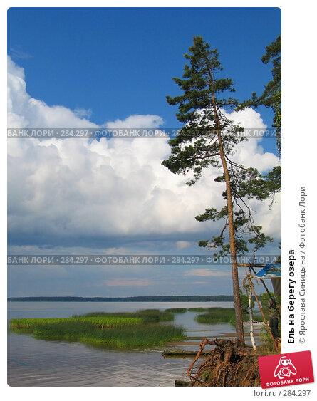 Купить «Ель на берегу озера», фото № 284297, снято 1 июля 2007 г. (c) Ярослава Синицына / Фотобанк Лори