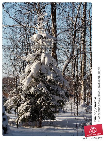 Купить «Ель под снегом», фото № 108337, снято 11 февраля 2007 г. (c) Александр Максимов / Фотобанк Лори