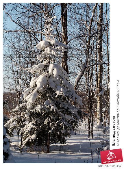 Ель под снегом, фото № 108337, снято 11 февраля 2007 г. (c) Александр Максимов / Фотобанк Лори