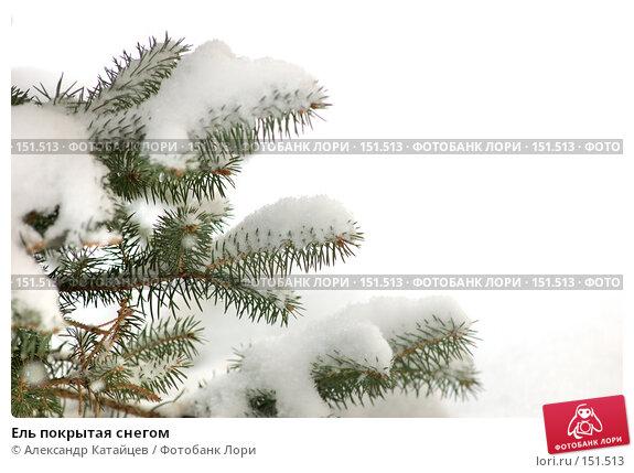 Купить «Ель покрытая снегом», фото № 151513, снято 2 декабря 2007 г. (c) Александр Катайцев / Фотобанк Лори