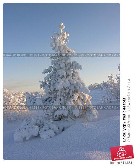 Елка, укрытая снегом, фото № 11881, снято 2 ноября 2006 г. (c) Виталий Матонин / Фотобанк Лори
