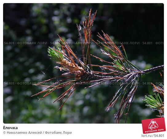 Ёлочка, фото № 54801, снято 15 июня 2007 г. (c) Николаенко Алексей / Фотобанк Лори