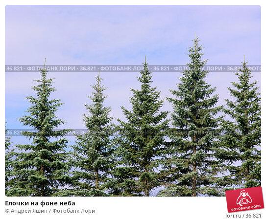 Елочки на фоне неба, фото № 36821, снято 10 июля 2005 г. (c) Андрей Яшин / Фотобанк Лори