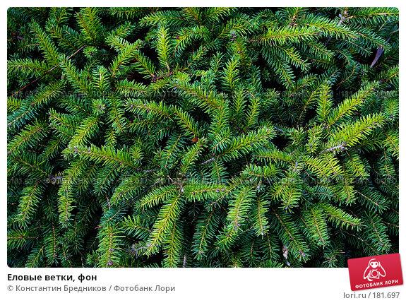 Еловые ветки, фон, фото № 181697, снято 15 октября 2006 г. (c) Константин Бредников / Фотобанк Лори