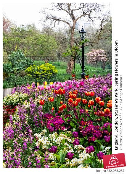 England, London, St.Jame's Park, Spring Flowers in Bloom. Стоковое фото, фотограф Steve Vidler / age Fotostock / Фотобанк Лори