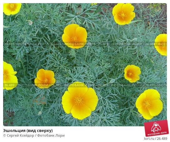 Эшольция (вид сверху), фото № 26489, снято 17 июля 2006 г. (c) Сергей Ксейдор / Фотобанк Лори