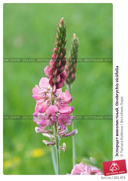 Купить «Эспарцет виколистный, Onobrychis viciifolia», фото № 292473, снято 20 мая 2008 г. (c) Tamara Kulikova / Фотобанк Лори