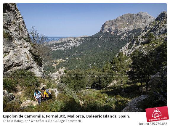 Espolon de Camomila, Fornalutx, Mallorca, Balearic Islands, Spain. Стоковое фото, фотограф Tolo Balaguer / age Fotostock / Фотобанк Лори