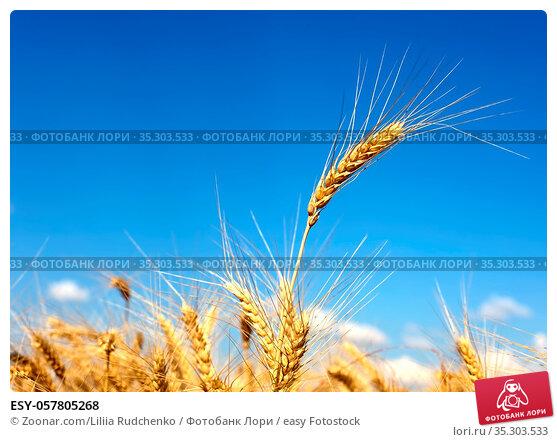 ESY-057805268. Стоковое фото, фотограф Zoonar.com/Liliia Rudchenko / easy Fotostock / Фотобанк Лори